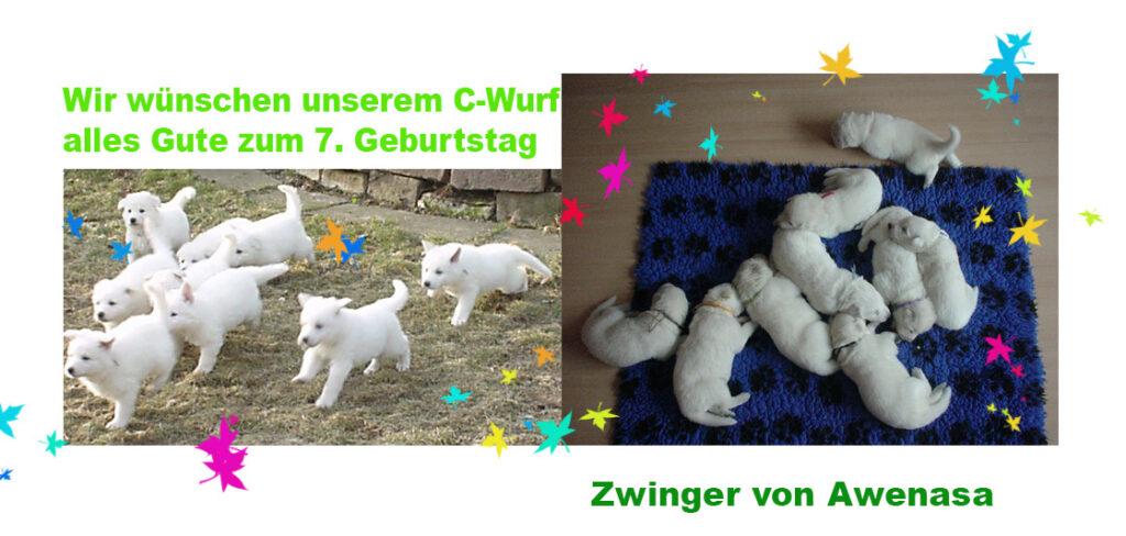 C-wurf-7.Geb