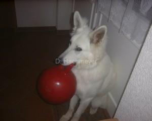 Lucky+jollyball-1