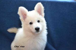 Charisa-DSC_5998